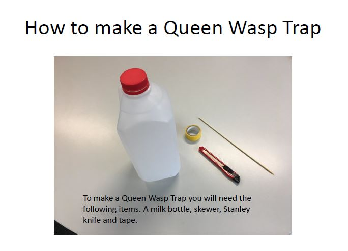 Queen wasp trap pic.JPG